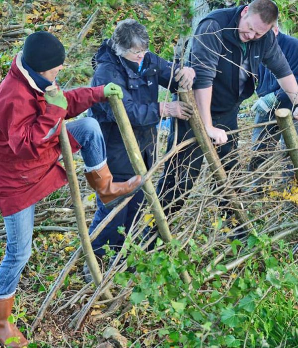 Learn how to lay a hedge on this great course, a great present for garden lovers.