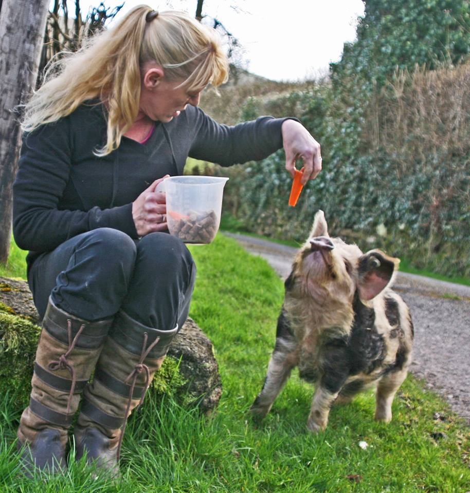 woman feeding a pig on a piggy walk in the brecon beacons