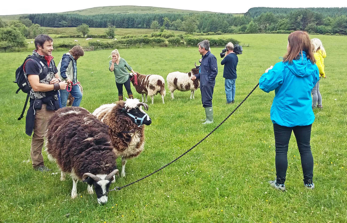 Jacob Sheep Trekking on the Brecon Beacons with Good Day Out