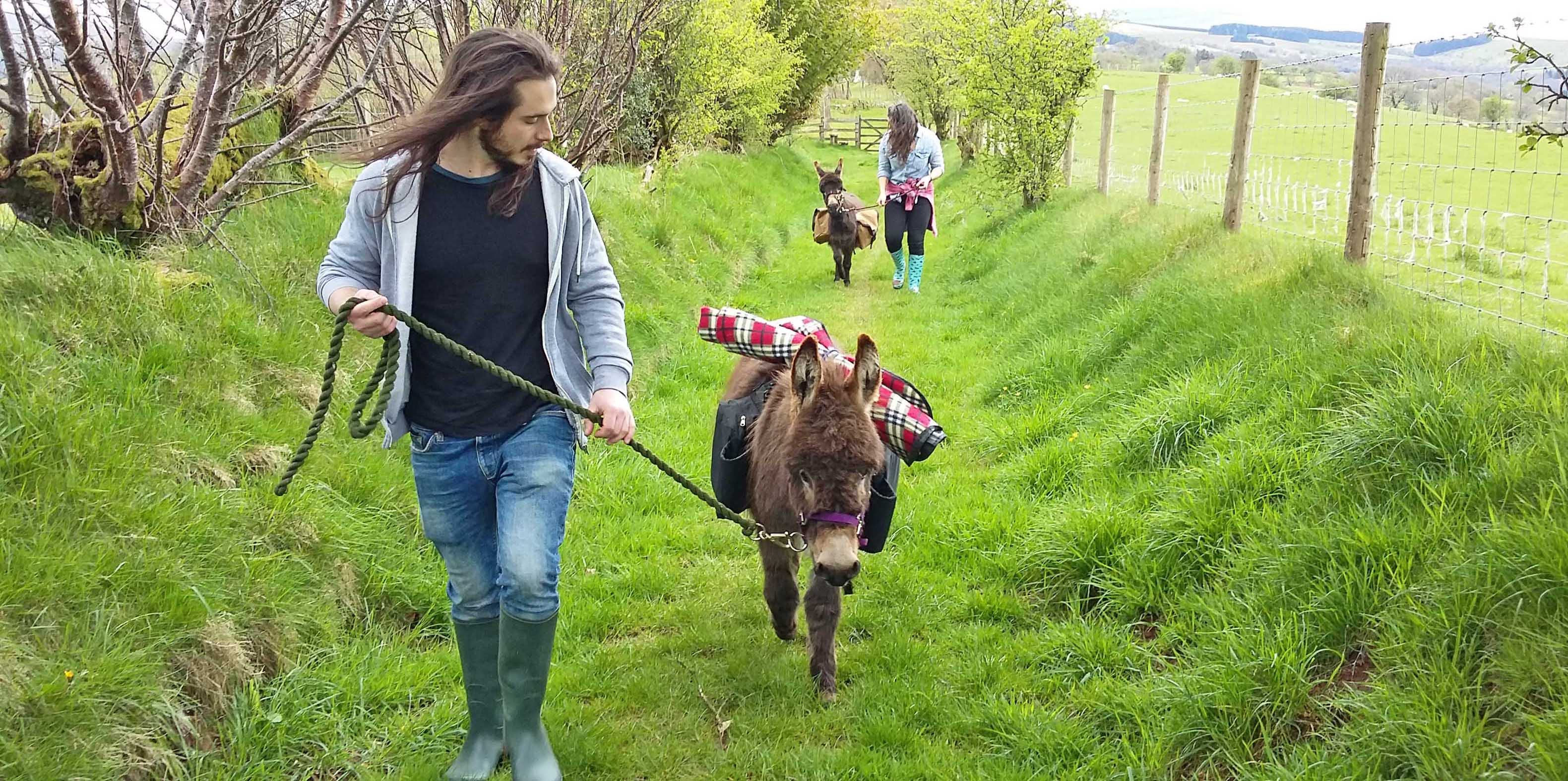 Walk a pair of mini donkeys in the Brecon Beacons