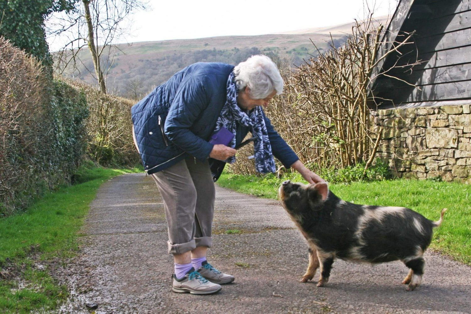 walk a pig with good day out