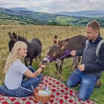 picnic with mini donkeys