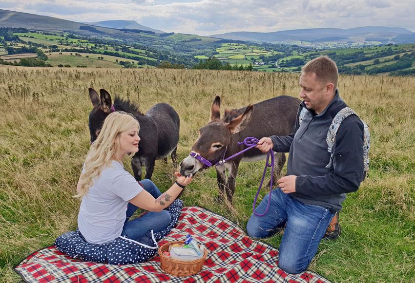 picnic with mini donkeys