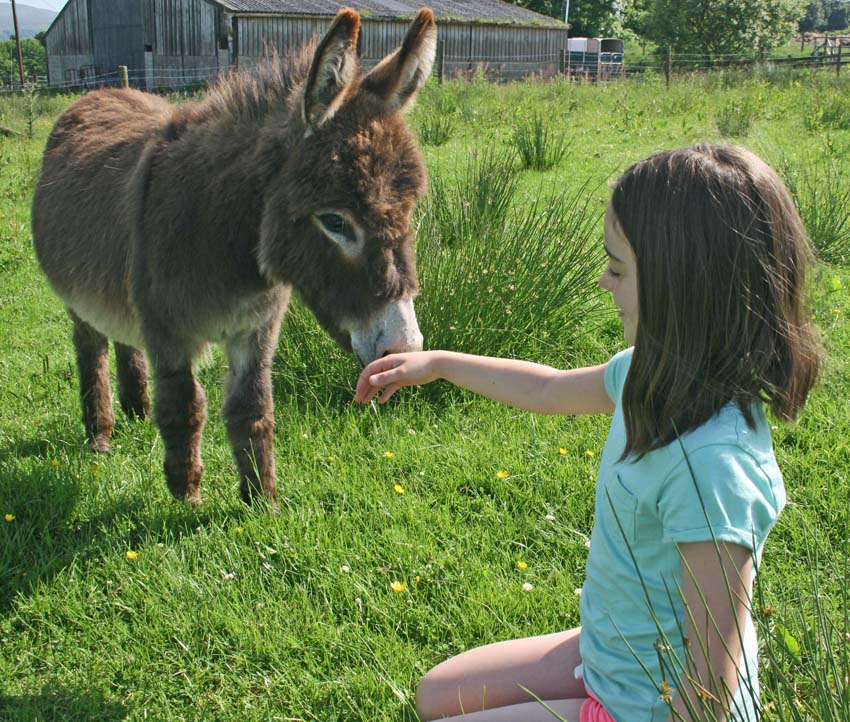 cute mini donkeys