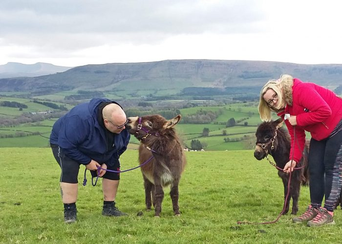 Walk miniature donkeys in the Brecon Beacons