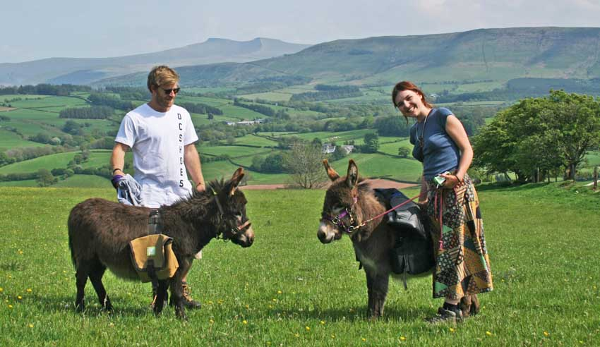 mini donkey walks brecon beacons