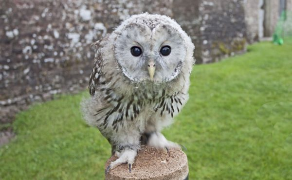 get close to owls in the Brecon Beacons with Good Day Out