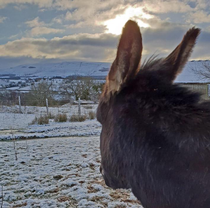 mini donkey in snow gooddayout