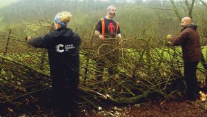 Hedge laying course with Lynne Allbutt at Good Day Out