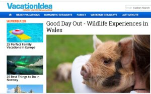 good day out piggy walk feature in USA Dream Vacation online magazine