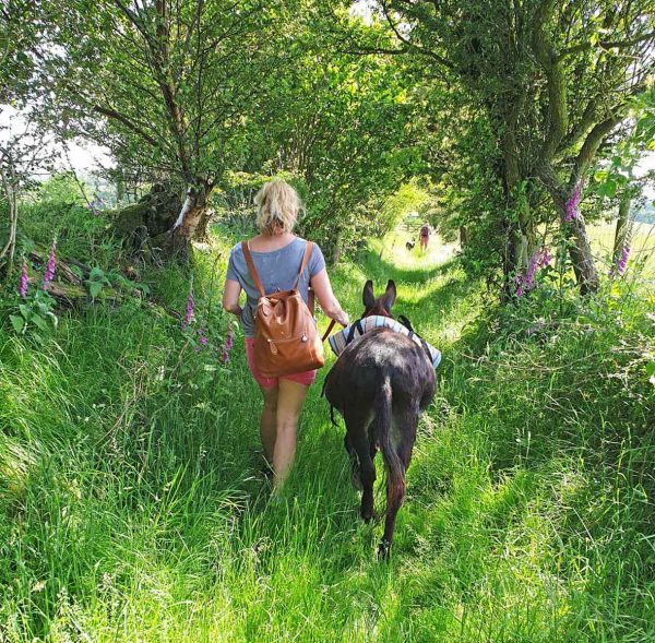 Walk miniature donkeys in wales with Good Day Out