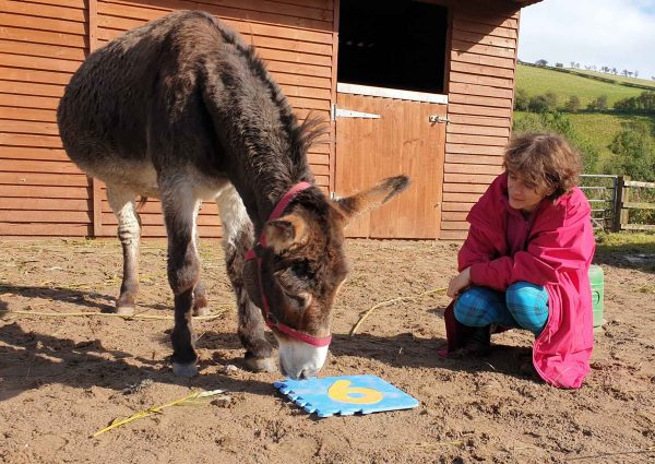 spend time with donkeys