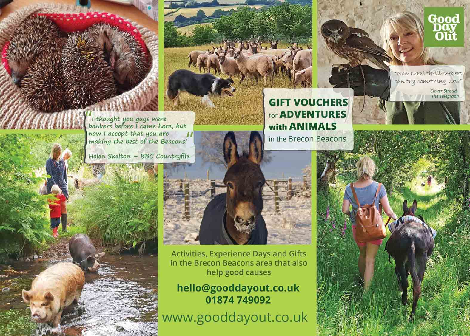 animal experience vouchers in wales