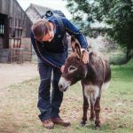 Good Day Out donkey fun photo © Yvette Robertshaw