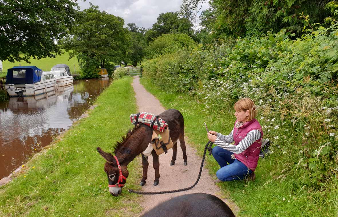 dinky donkeys as the Mons and Brecon canal