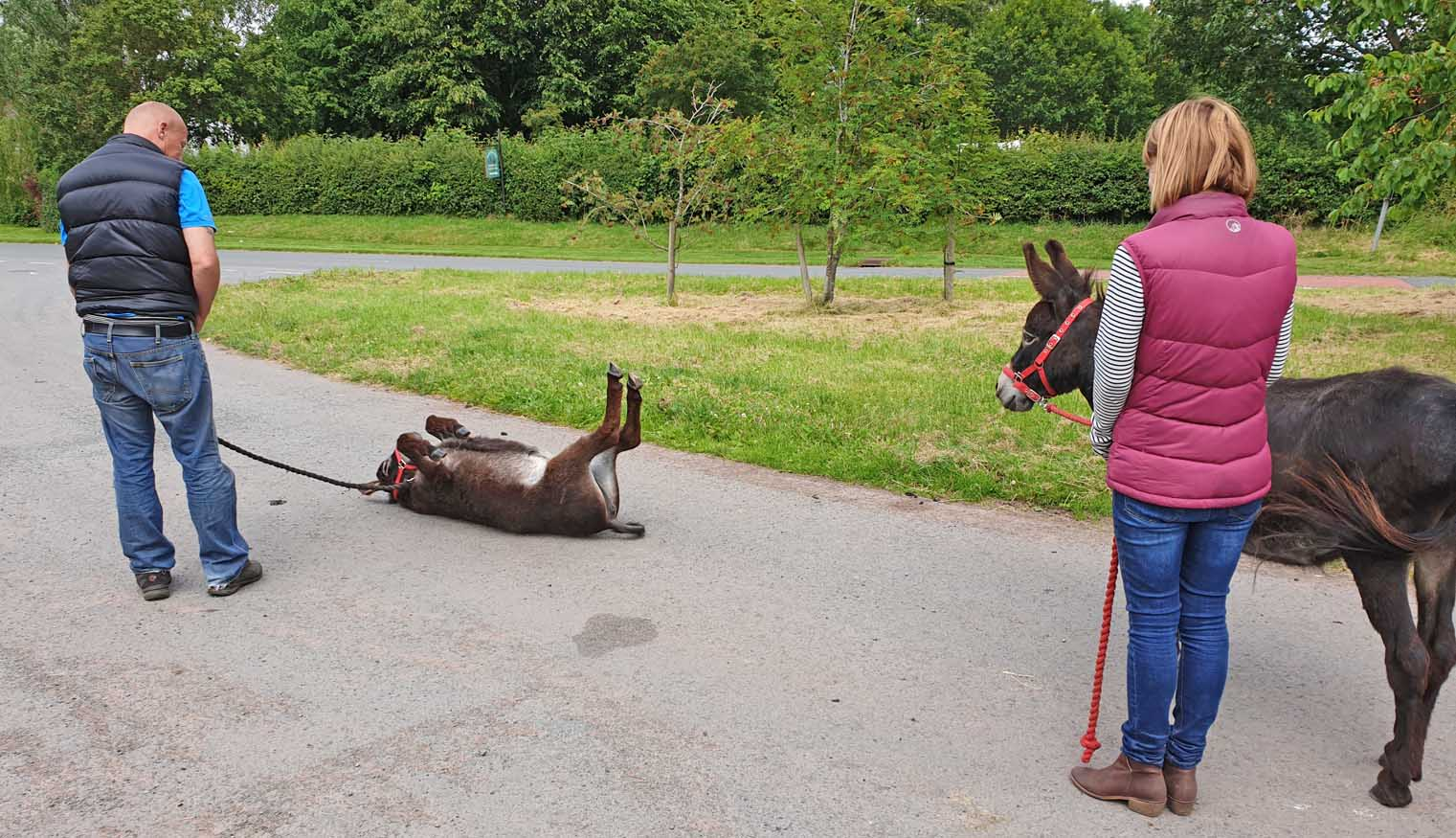 bbc wales canal series with donkeys