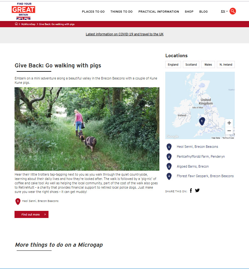 visit britain microgap walking pigs