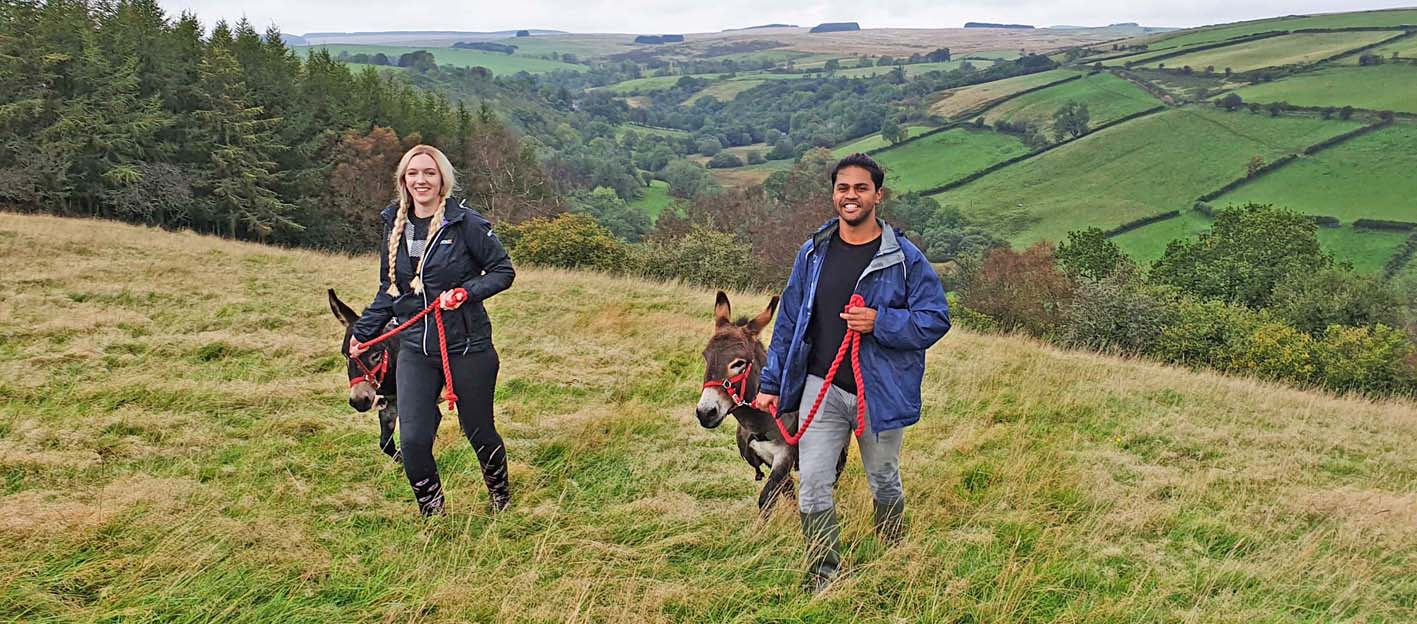 walking mini donkeys through farmland in the Brecon Beacons in wales makes a great staycation
