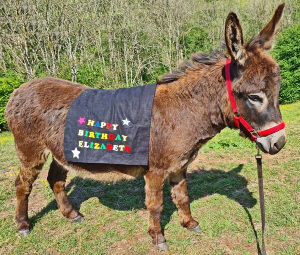 enjoy a live zoom appearance from a mini donkey