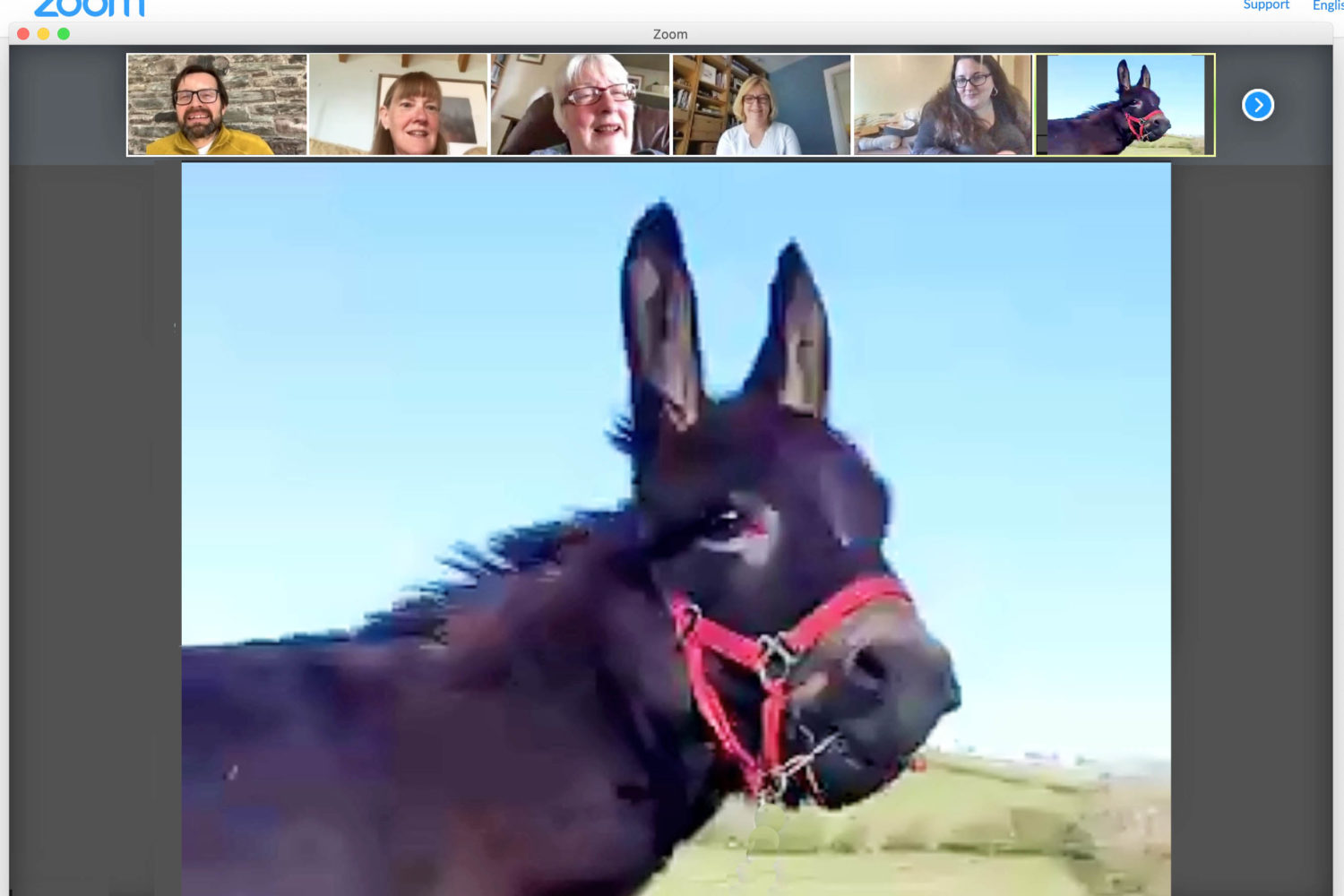 raise funds to treat the NHS with a virtual donkey appearance