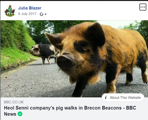 BBC news online pig walking video