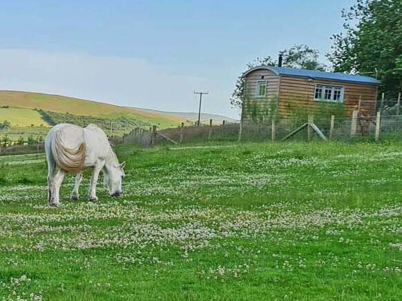 glamping in a shepherds hut in the brecon beacons near Brecon