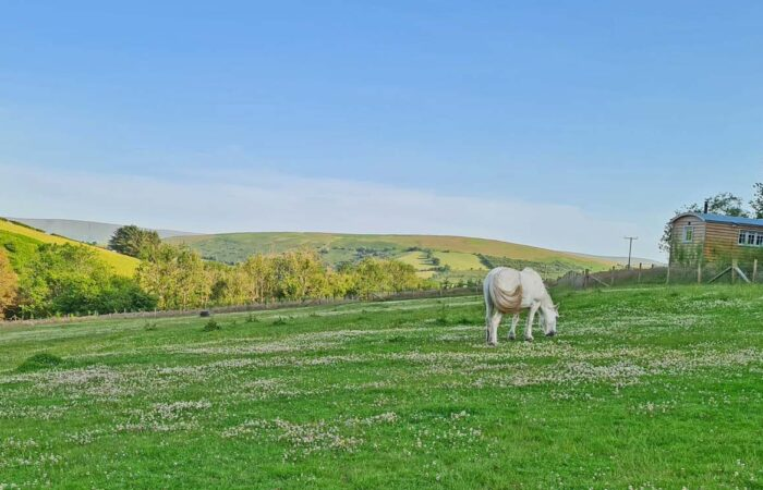 stay in a shepherds hut in wales with horses