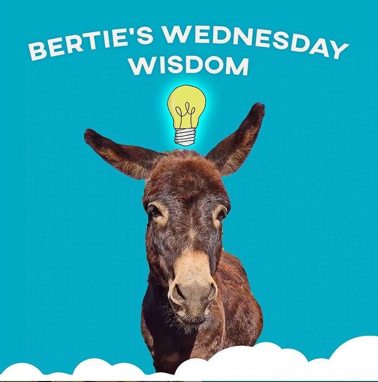 bertie the mini donkey has a virtual job in marketing