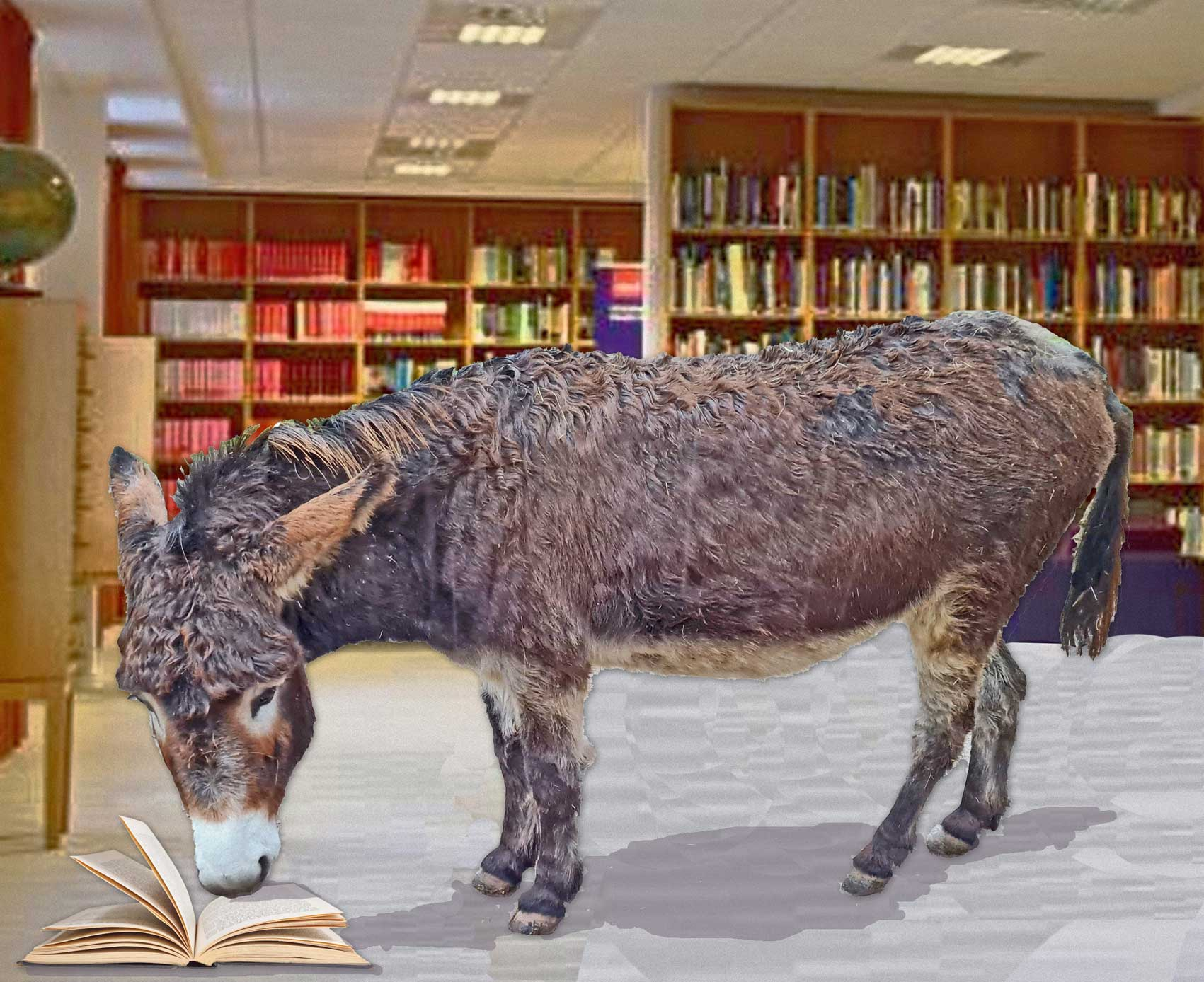Betty the Donkey would like to be a librarian
