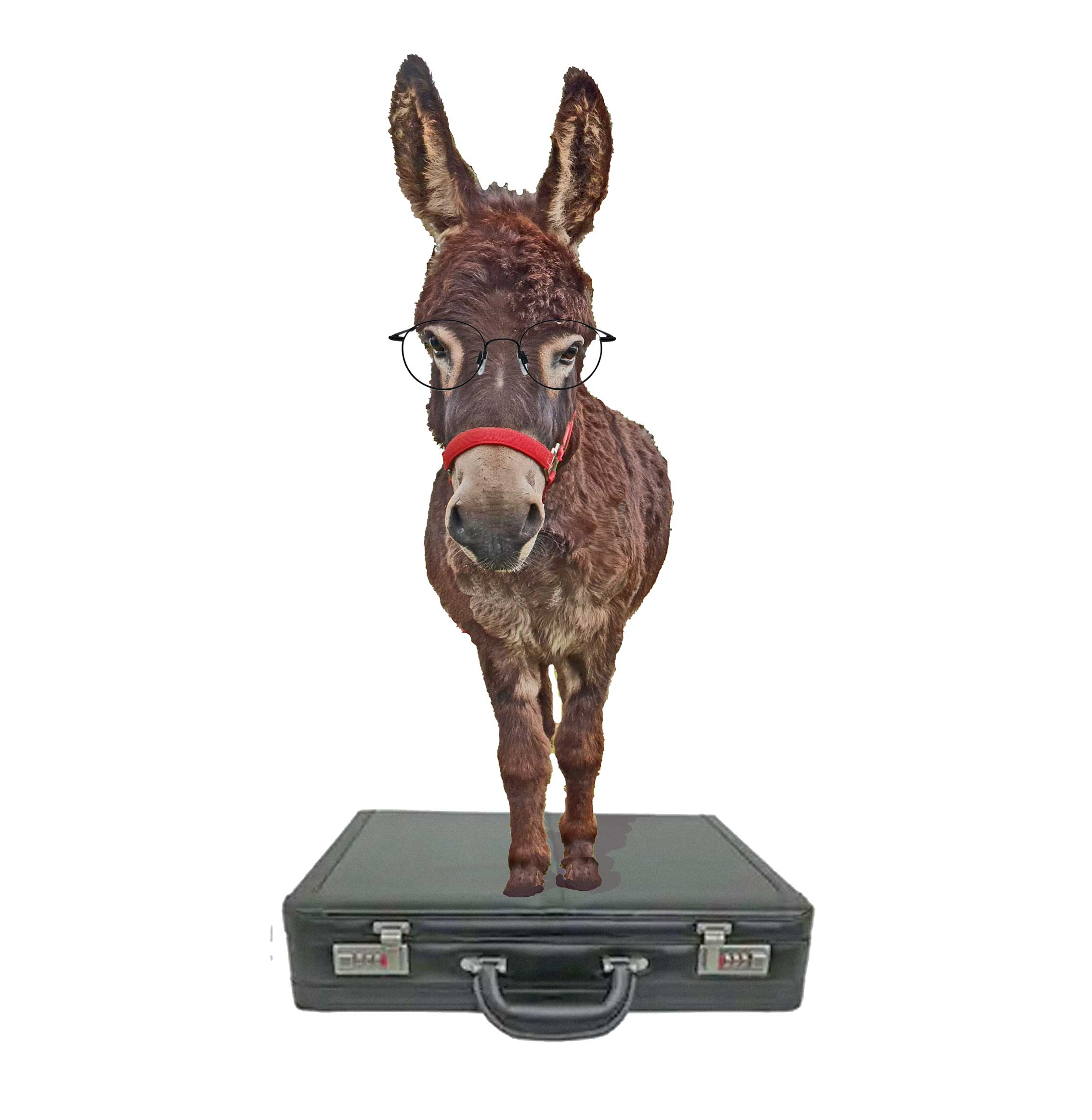 goose the donkey works at being an accountant