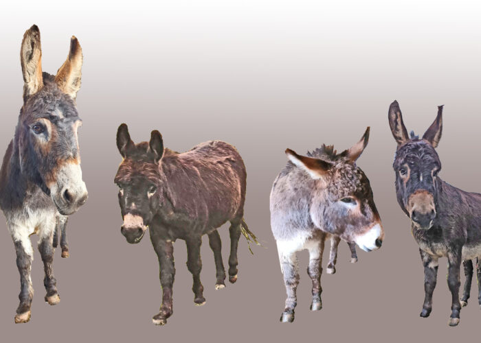 give a little donkey a job this winter
