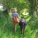 walk with a little donkey in wales - quiet low key encounters with animals