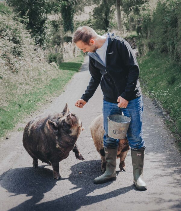 walk a pig in wales