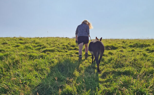 forage in the countryside with good day out and a little donkey