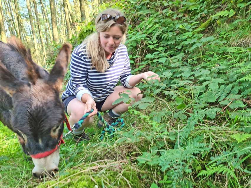 go foraging with a guide and a little donkey in Wales